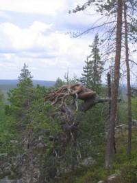 Arvoituksia ja pähkinöitä Suomen luonnosta osa I: Eläimistö