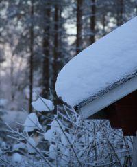 Arvoituksia ja pähkinöitä Suomen luonnosta osa III: Talven ihmemaa