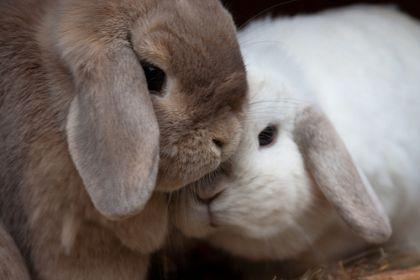 Eläinten viikko 2011: Pidä huolta pienistäkin