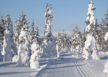 Retkeilemässä Lapin talvisessa luonnossa