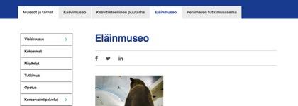 Oulun yliopiston eläinmuseo