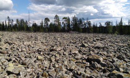 kivikkopeltoa-1
